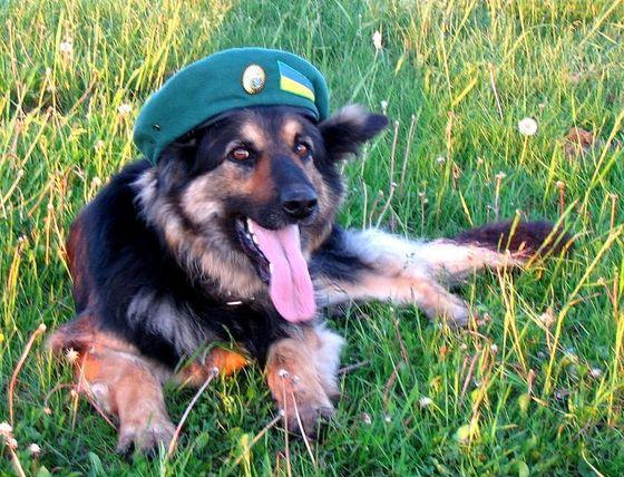 Открытка со служебной собакой