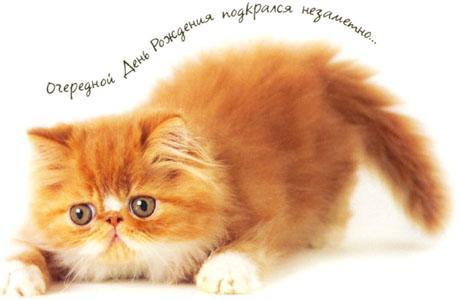 Открытка с днем рождения, котик!