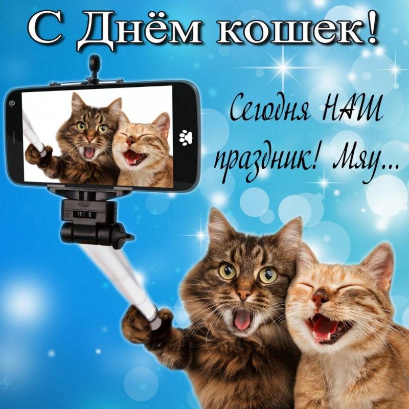 Открытка сэлфи котов