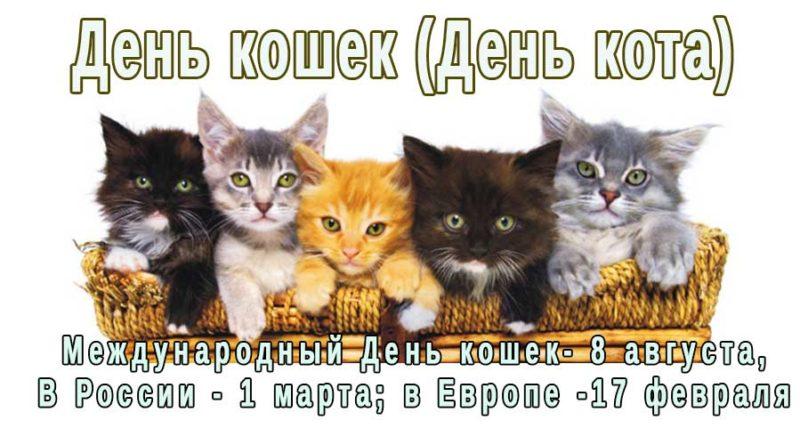 Открытка день кота в разных странах