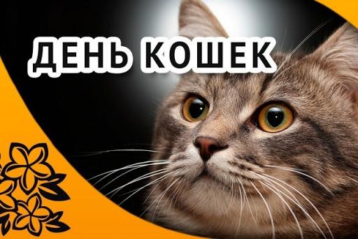 Открытка с полосатиком день кошки