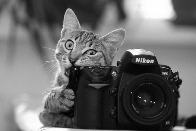 Открытка фотограф