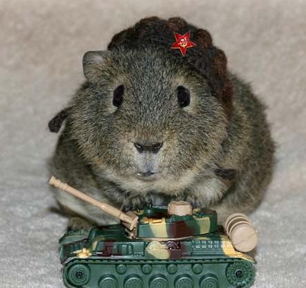 Открытка я на танке :-)