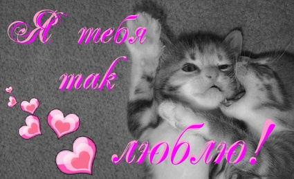 Нежная открытка я тебя так люблю