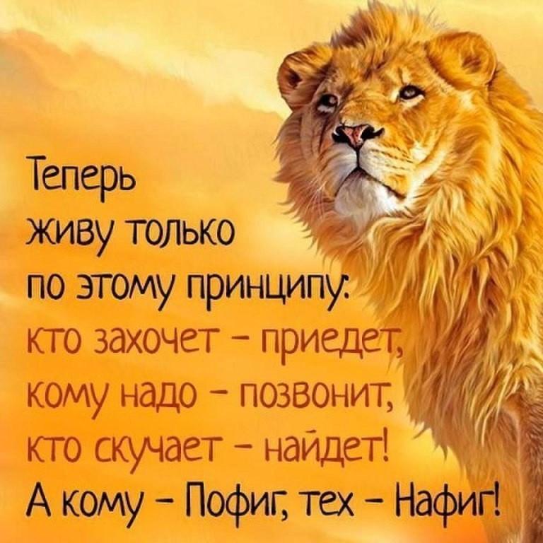 Открытка принцип льва