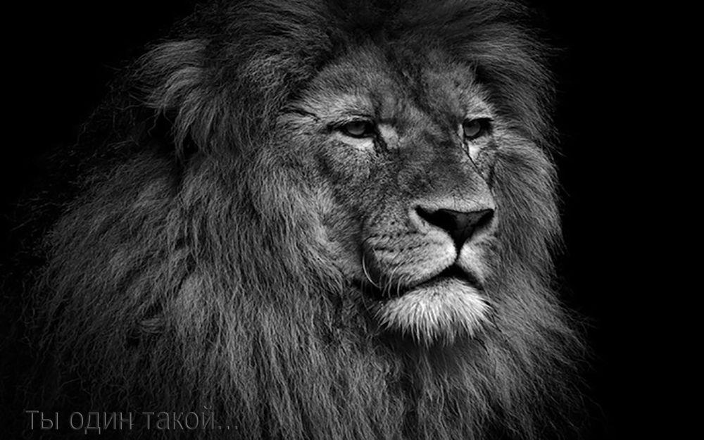 Открытка для мужчины-льва