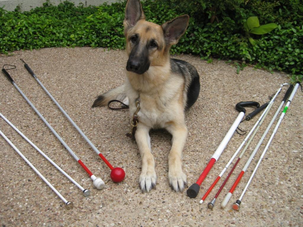 Открытка собака-поводырь