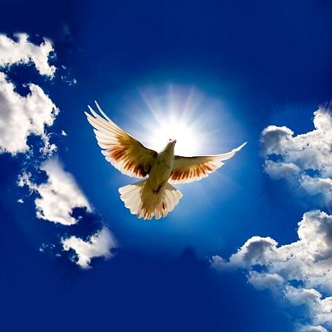 Открытка день мира!