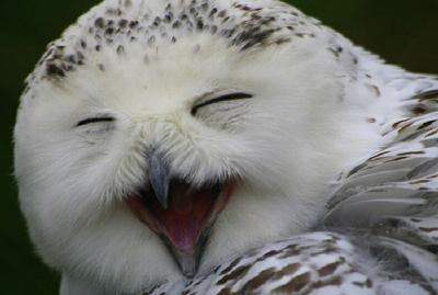 Прикольная открытка с птицей