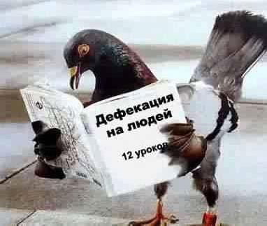 Смешная открытка с птицами