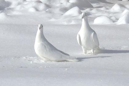 Красивая открытка с птичками
