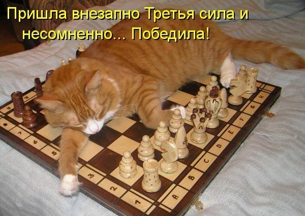 Прикольная открытка с шахматами