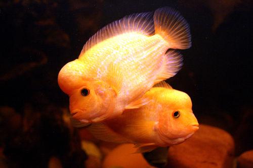 Открытка моей рыбке