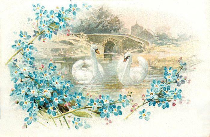 Открытка лебеди