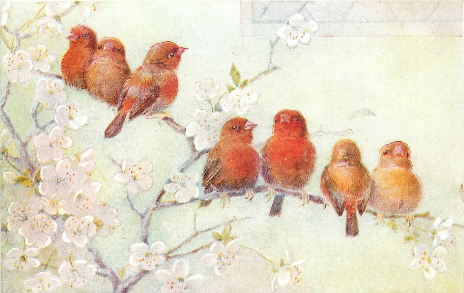 Открытка красные кардиналы