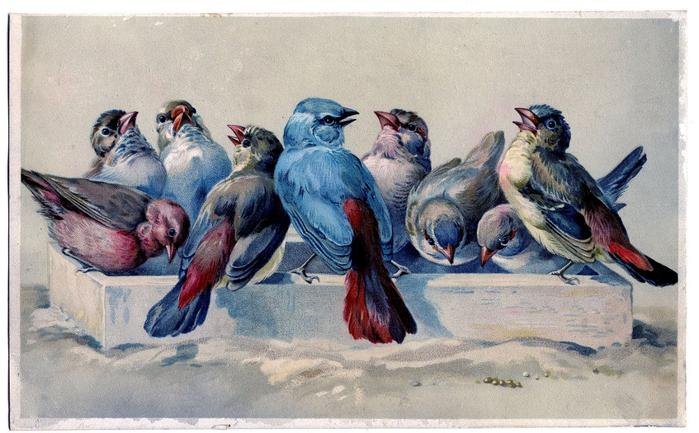 Открытка птицы