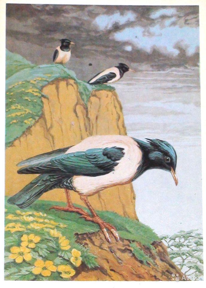 Открытка с птицами художника Егорова В. Е.