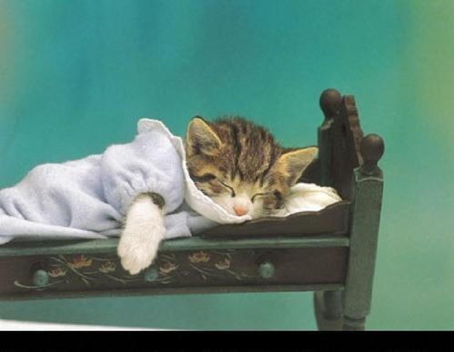 Открытка спокойной ночи с кошкой