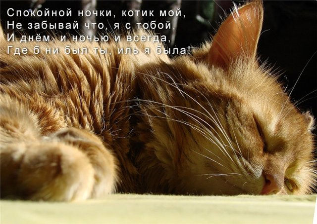 Открытка спокойной ночи, котик!