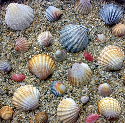 Открытка ракушки на песке