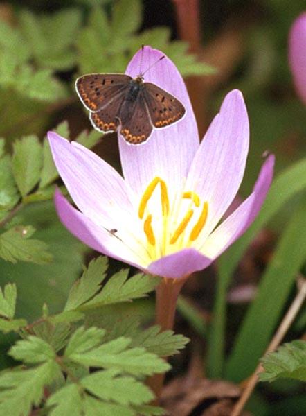 Открытка цветок
