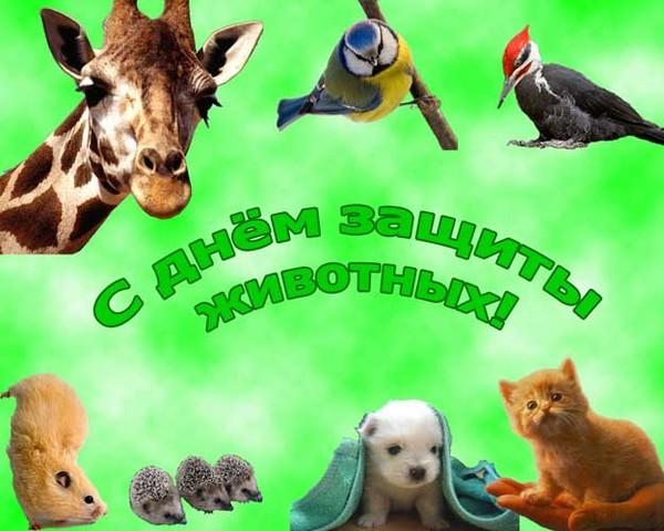 Открытка защитим животных