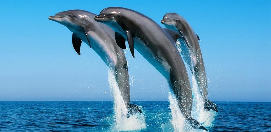 Открытка дельфины