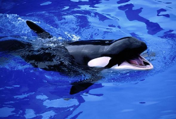 Открытка 23 июля — всемирный день китов и дельфинов