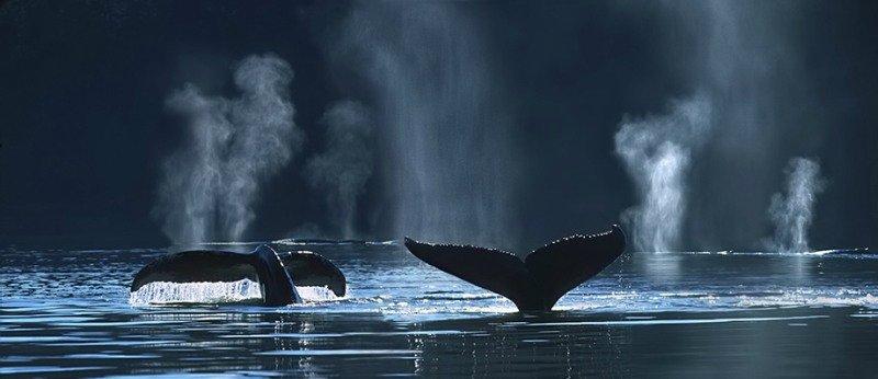 Открытка день китов!