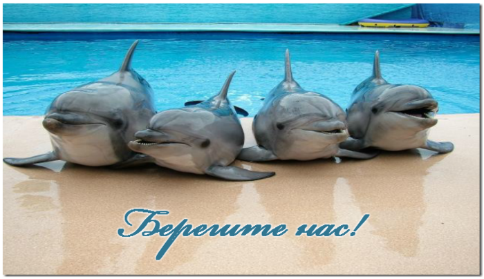 Открытка с дельфинами