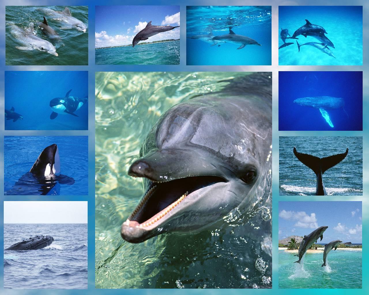 Открытка-коллаж с днём китов и дельфинов