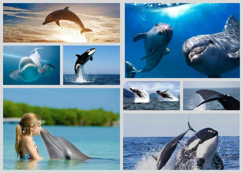 Открытка поможем китам и дельфинам