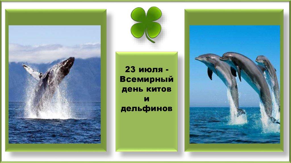 Открытка на всемирный день китов и дельфинов