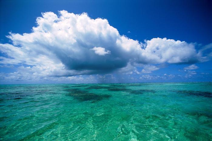 Открытка всемирный день океанов!