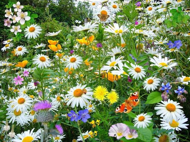 Открытка летние цветы