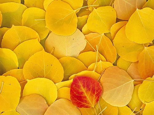 Открытка жёлтые листья